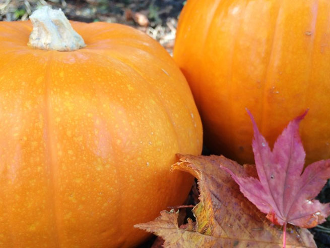 Tahoe City Fall Festival & Pumpkin Patch on October 18th